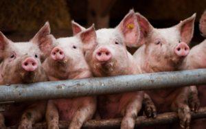 В Запорожской области произошел пожар в хозпостройке: едва не сгорели 50 свиней