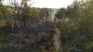Запорожская область продолжает страдать от пожаров: за сутки огонь охватил территорию в 15 гектаров - ФОТО