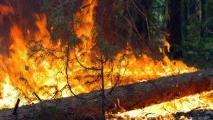 На Запорожье за сутки произошло 18 пожаров в открытой местности