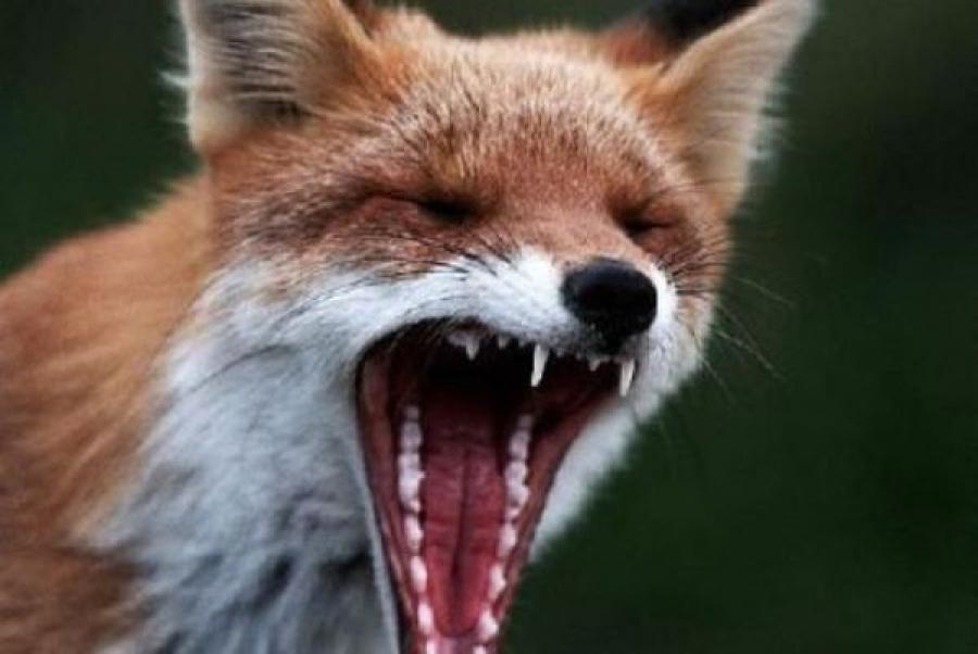 ВЗапорожье патрульные убили бешеного зверя