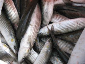 Браконьеры выловили рыбы на 38 тысяч гривен - ФОТО