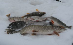 В Запорожской области начинается запрет на вылов рыбы