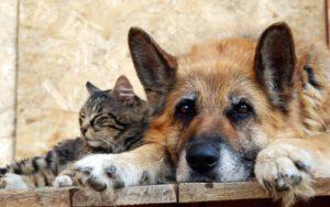 В Запорожье стерилизацией животных будет заниматься австрийская компания