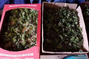 У жителя области изъяли наркотиков на 400 тысяч гривен - ФОТО