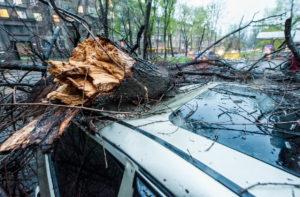 В Запорожской области дерево упало на автомобиль: спасателям пришлось распиливать сухостой, чтобы достать водителя
