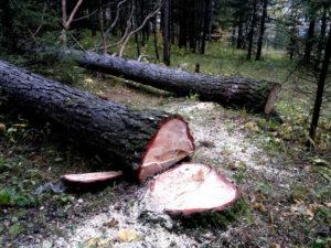 В Запорожье вырубят более 400 деревьев в Вознесеновском парке
