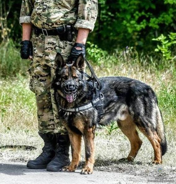 Служебная собака погибшего в ДТП полицейского вернулась на место аварии
