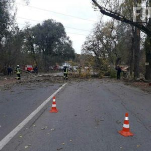 В Запорожье два дерева едва не упали на дорогу - ФОТО