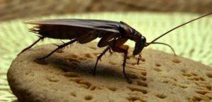 В запорожском супермаркете по печенью ползают тараканы - ФОТО