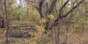 Запорожский дайвер обнаружил останки затопленной психиатрической клиники, построенной более 100 лет назад – ФОТО, ВИДЕО