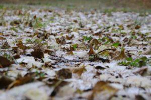 В Запорожье пошел первый снег - ФОТО, ВИДЕО