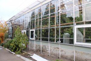 В Запорожском ботаническом саду принялись спасать тропические растения от морозов за 2 миллиона гривен
