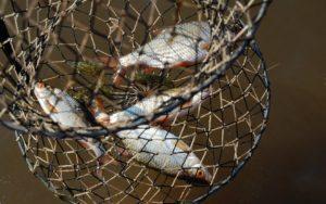 На побережье Азовского моря поймали браконьеров с уловом на 21 тысячу гривен - ФОТО