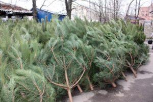В Запорожской области начали торговать елками - ФОТО