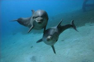 В Запорожской области мертвого дельфина выбросило на берег - ФОТО