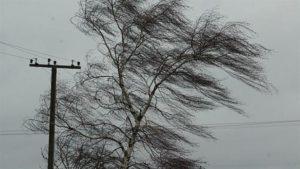 В Запорожье дерево упало на проезжую часть и загородило дорогу автомобилям – ФОТО