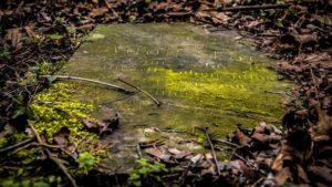 Ученые вскрыли могилу Николая Чудотворца - ФОТО