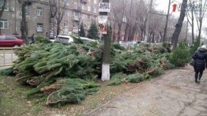 Где и за сколько в Запорожье можно купить елку - ФОТО