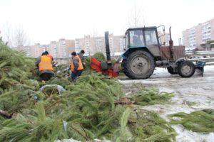 В Запорожье три мобильные бригады утилизируют новогодние елки - ФОТО