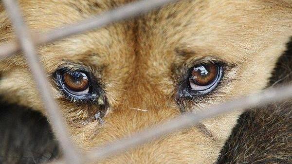 В Запорожье на Хортице живодер замучил дикое животное - ФОТО (18+)