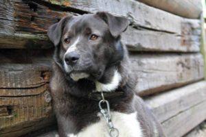 В Запорожской области грабители вломились в дом и убили собаку