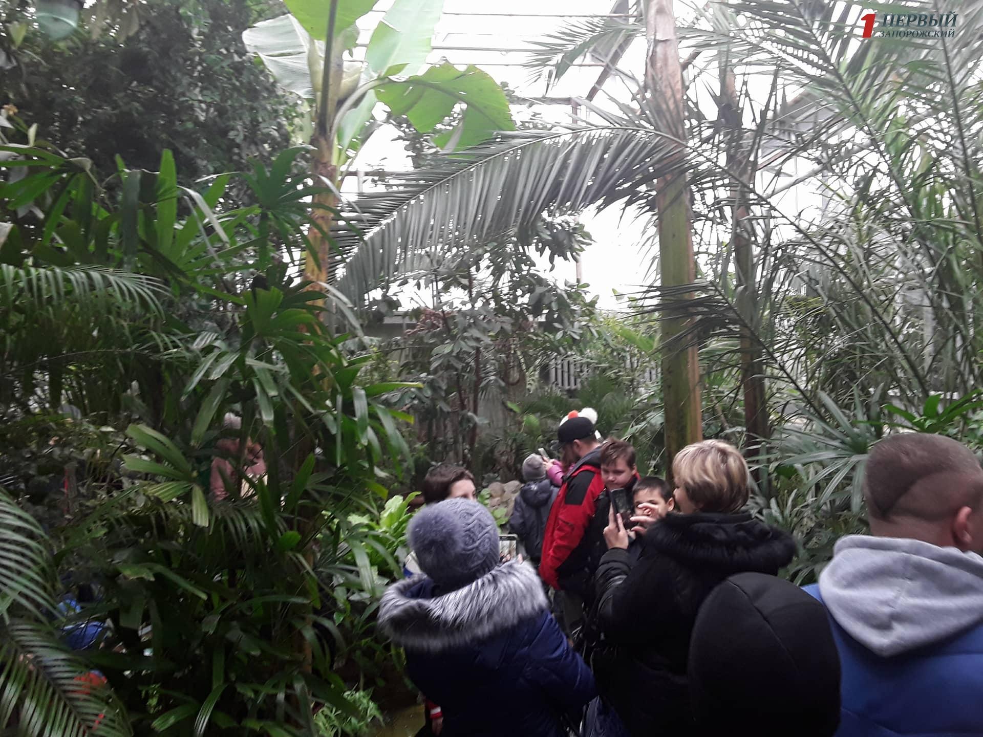 Ботанический сад удивляет запорожцев своей новой зимней теплицей - ФОТО, ВИДЕО