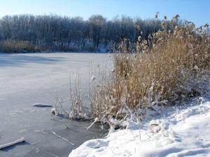 В Запорожской области в пруду обнаружили тело мужчины