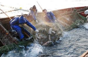 Запорожская область побила рекорд по добыче рыбы среди других регионов Украины