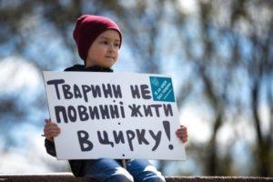 Запорожские активисты выйдут митинговать против использования животных в цирке