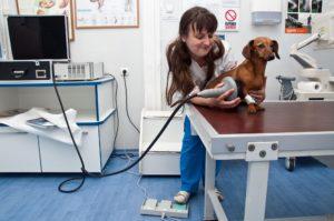 Запорожский областной совет больше не будет финансировать ветеринарную медицину