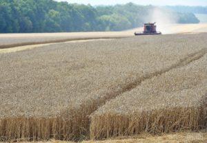 В Запорожской области фермеры получили 15 миллионов гривен дотаций из бюджета