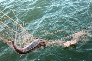 В Запорожском районе поймали браконьера с целой лодкой добычи - ФОТО