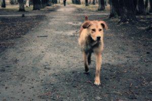 В Запорожье живодер убил собаку и хотел ее съесть