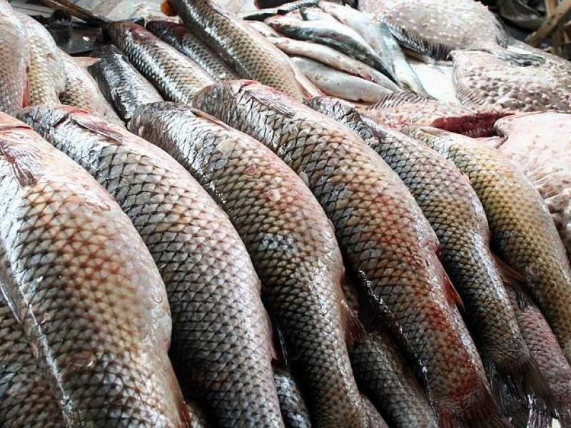 В Запорожской области задержали браконьера с уловом на 66 тысяч гривен - ФОТО