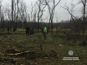 В Запорожье патрульные поймали банду «черных» лесорубов - ФОТО