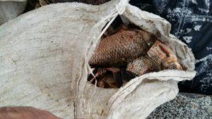 Под Запорожьем задержали браконьера с солидным уловом - ФОТО