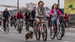 Запорожские велосипедистыпроведут под мэрией акцию «велосипедом на роботу»