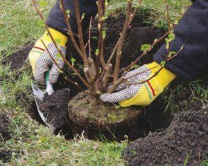Из областного бюджета выделят 6,3 миллиона гривен на высадку новых деревьев