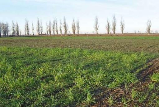 В Запорожской области неустойчивая погода частично повредила будущий урожай