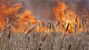 На запорожском курорте на площади двух гектаров горел камыш