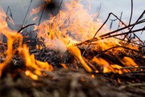 В Запорожской области огонь повредил 7,5 гектара открытой местности