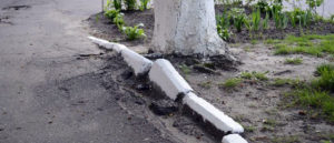 В Запорожье предлагают запретить побелку бордюров, столбов и стволов деревьев