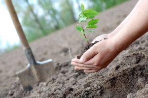 В Запорожской области на создание защитных лесных насаждений потратят более 6 миллионов гривен
