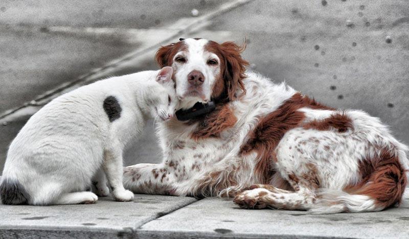 В Запорожье предусмотрели 1,2 миллиона гривен на стерилизацию животных