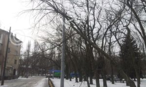 В Запорожской области сильный ветер повалил дерево на электропровода - ФОТО