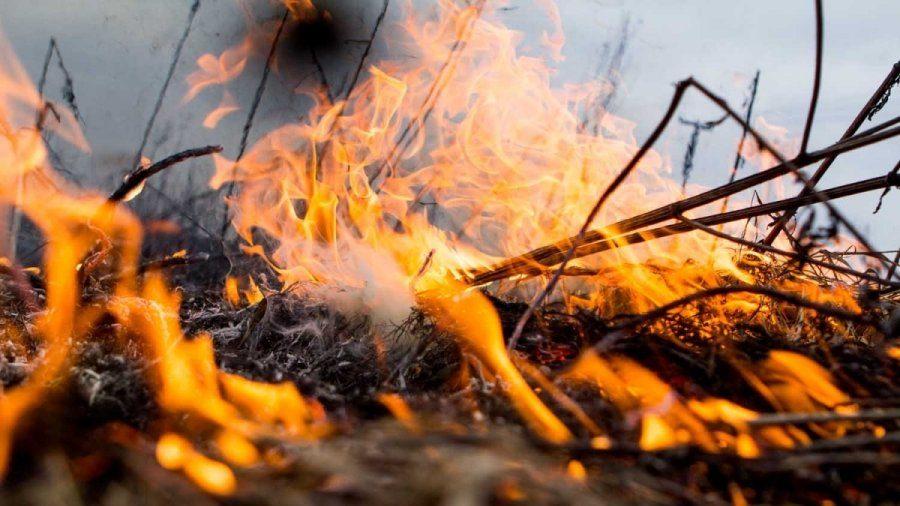 В Запорожской области более 100 спасателей тушили пожары в экосистемах