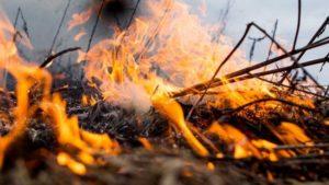 У Запорізькій області за добу сталося понад 40 пожеж в екосистемах