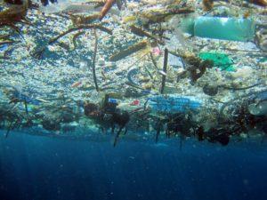 Экологи прогнозируют, что объем пластикового мусора в морях и океанах за 10 лет увеличится втрое