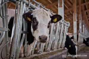 Запорожские фермеры получат 20 миллионов гривен дотаций на животноводство