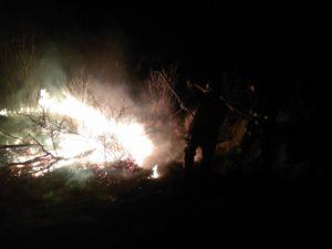 В Запорожской области за сутки произошло 15 пожаров в экосистемах - ФОТО